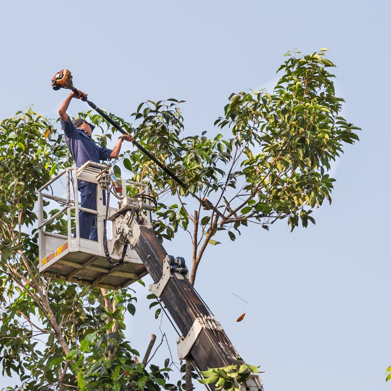 Tree-Pruning-faq