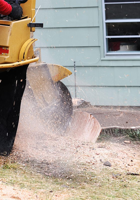 Tree-Stump-Grinding-faq-img